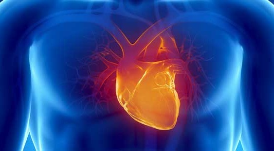 Advanced Heart Failure Fellowship: How to Prepare?